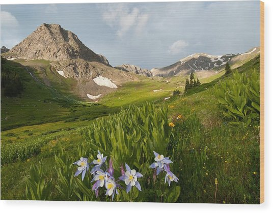 Handie's Peak And Blue Columbine On A Summer Morning Wood Print