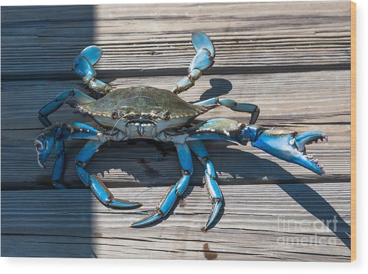 Blue Crab Pincher Wood Print