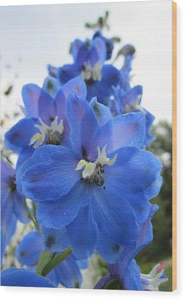 Blue Delphinium Rising Wood Print