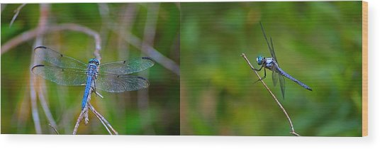 Blue Dragon Fly Wide Print Wood Print