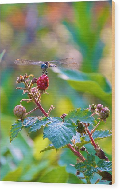 Blue Dragonfly On Berry Wood Print