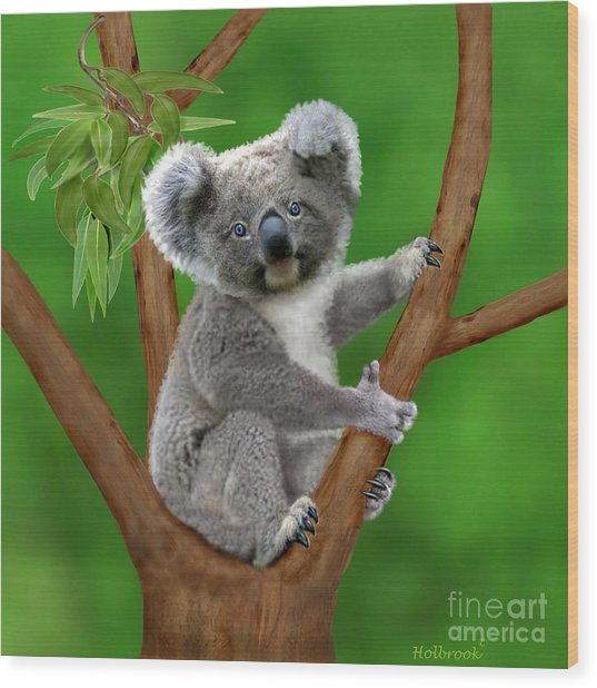 Blue-eyed Baby Koala Wood Print