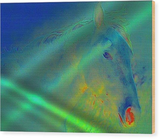 Blue Eyed Horse Wood Print by Ernestine Manowarda