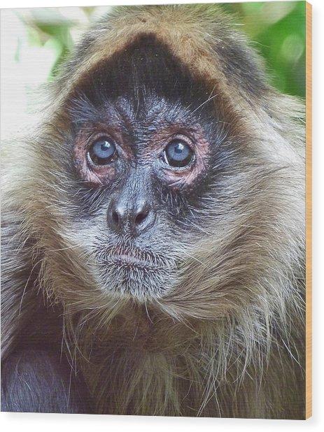 Blue Eyed Spider Monkey Wood Print by Margaret Saheed