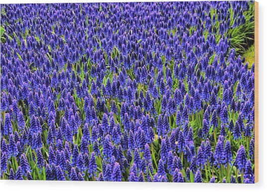 Blue Fields Wood Print