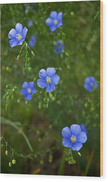 Blue Flax Wood Print