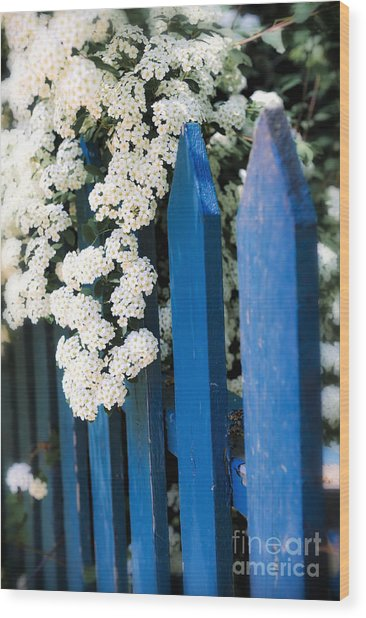 Blue Garden Fence With White Flowers Wood Print