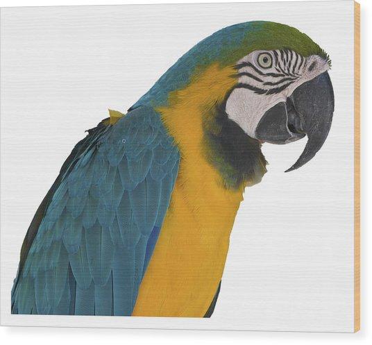 Blue Gold Macaw Wood Print