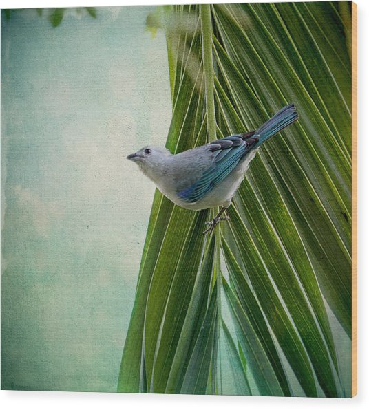 Blue Grey Tanager On A Palm Tree Wood Print