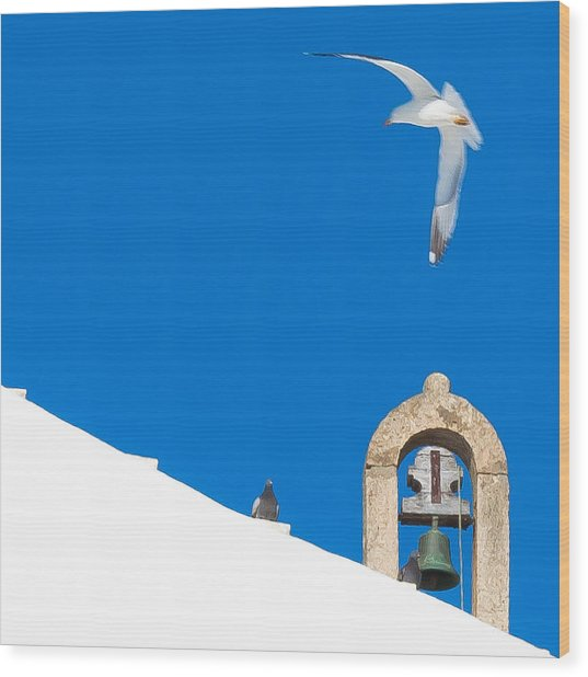Blue Gull Wood Print