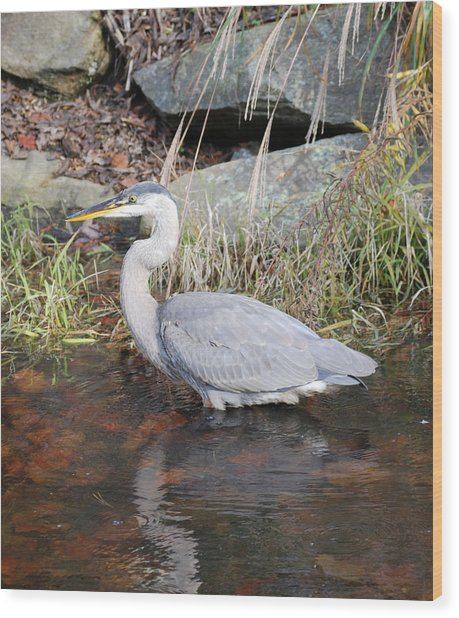 Blue Heron II Wood Print