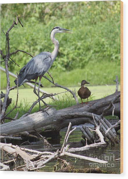 Blue Heron And Friend Wood Print