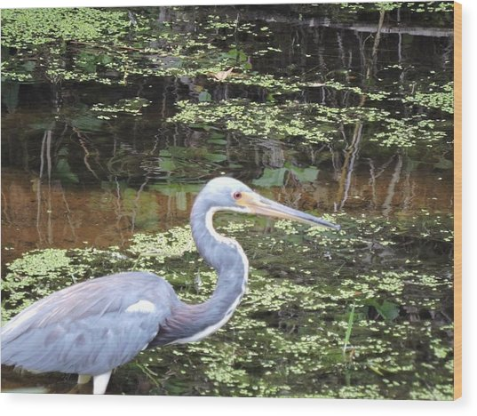 Blue Heron Close Up Wood Print by Beth Williams
