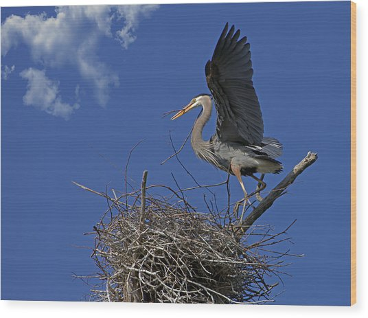 Blue Heron Construction Site Wood Print