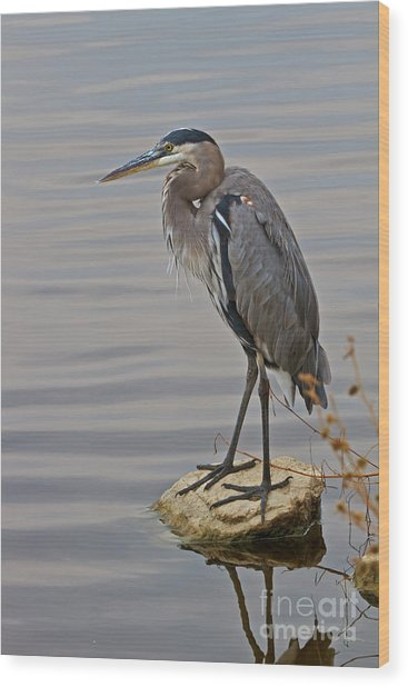 Blue Heron IIi Wood Print