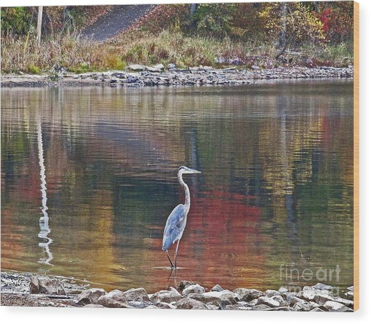 Blue Heron In Autumn Wood Print