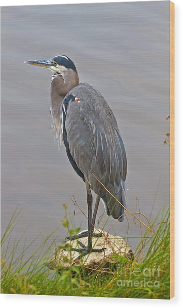 Blue Heron Iv Wood Print