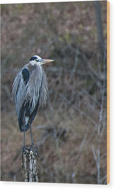 Blue Heron On Stump Wood Print by Bill Perry