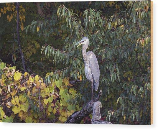 Blue Heron Perched In Tree Wood Print