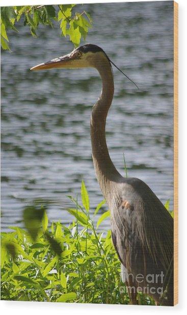 Blue Heron Sunning Wood Print