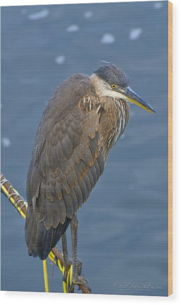 Wood Print featuring the photograph Blue Herron by Jim Thompson