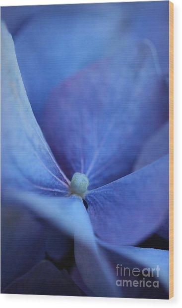 Blue Hydrangea 2 Wood Print