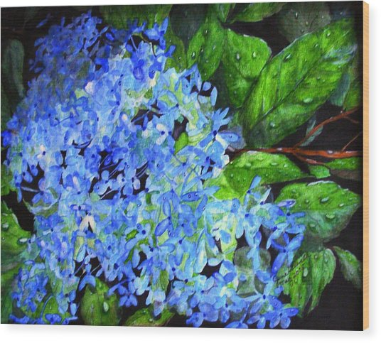 Blue Hydrangea After The Rain Wood Print