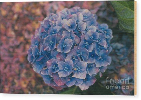 Blue Hydrangea Wood Print