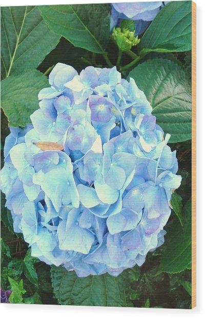 Blue Hydrangea Wood Print by Van Ness