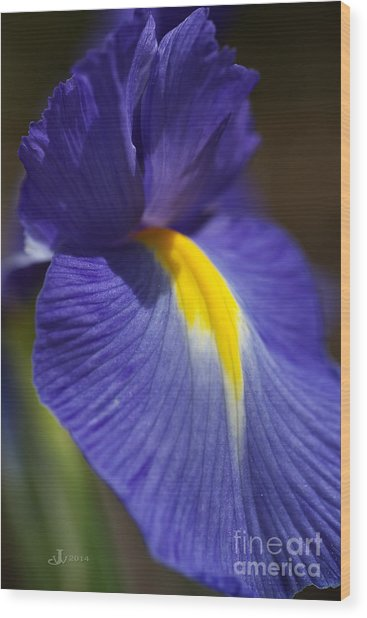 Blue Iris With Yellow Wood Print