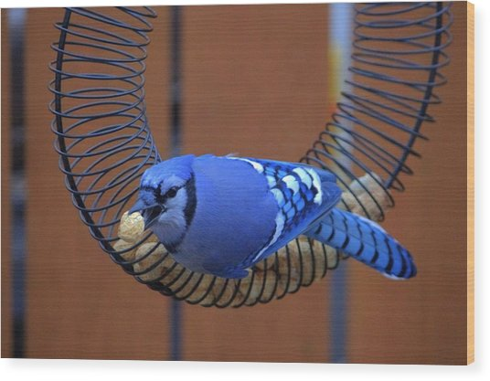 Blue Jay At The Feeder Wood Print by Larry Trupp