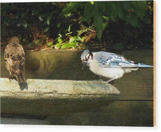 Blue Jay Hello Wood Print by Lisa Roy