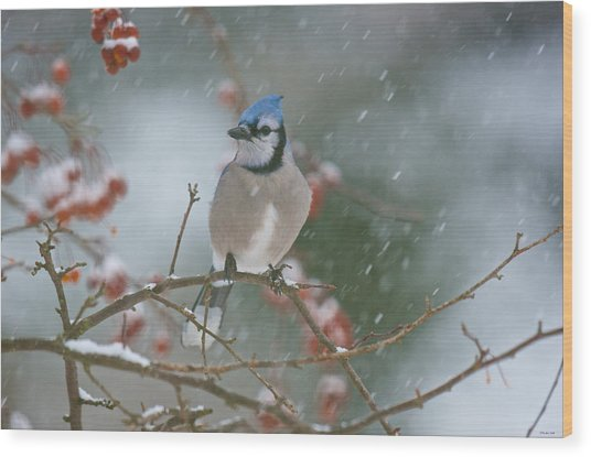 Blue Jay In Snow Wood Print