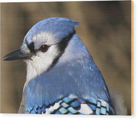 Blue Jay Profile Wood Print