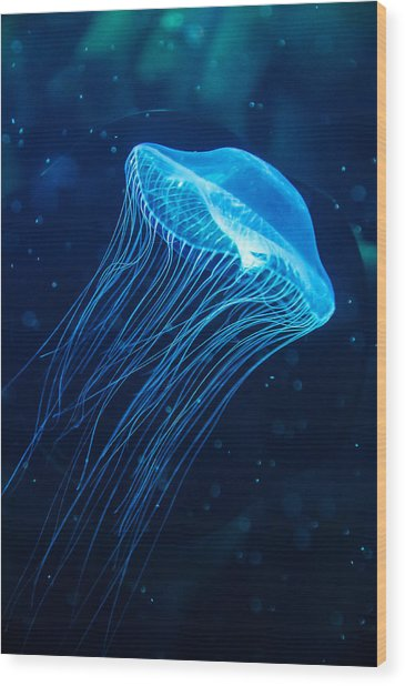 Blue Jelly Wood Print