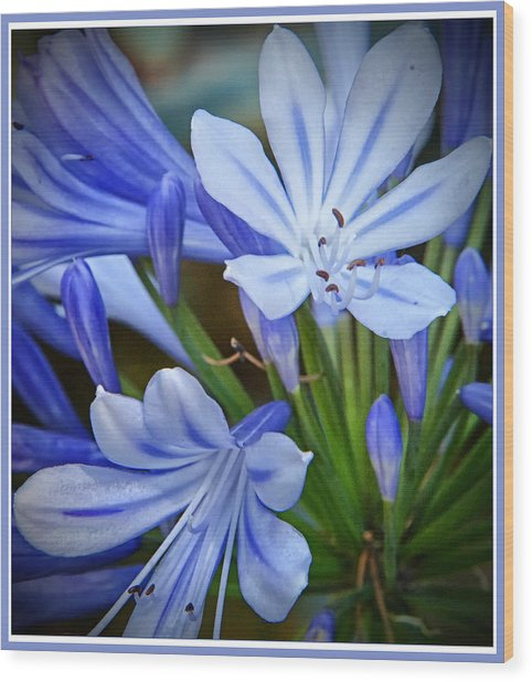 Blue Lilie Wood Print