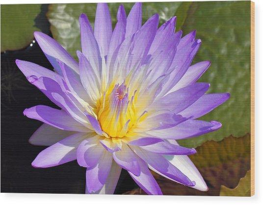 Blue Lily Wood Print