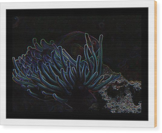 Blue Magic Light Fish  Wood Print