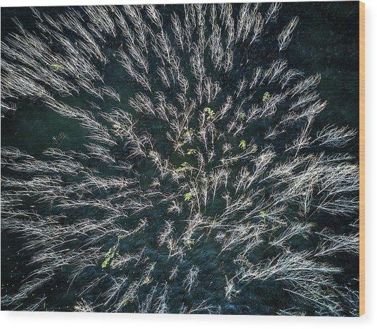Blue Mangrove Wood Print