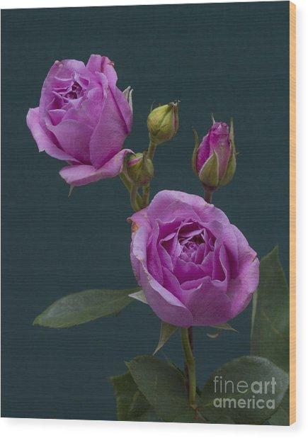 Blue Moon Roses Wood Print