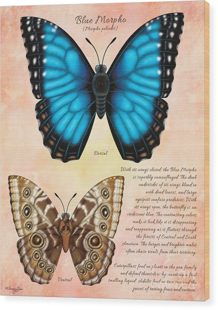 Blue Morpho Butterfly Wood Print by Tammy Yee