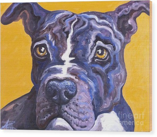 Blue Nose Pitbull Wood Print