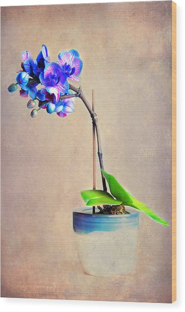 blue Orchid Wood Print by Angela Bruno