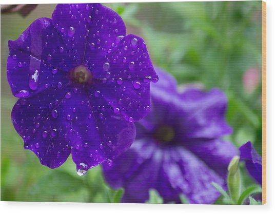 Blue Pansies After A Rain Wood Print