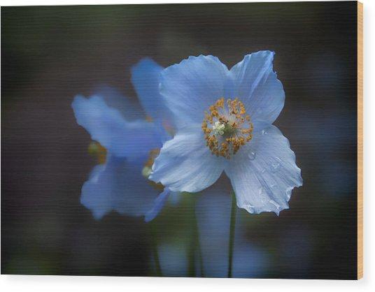 Blue Poppy Wood Print