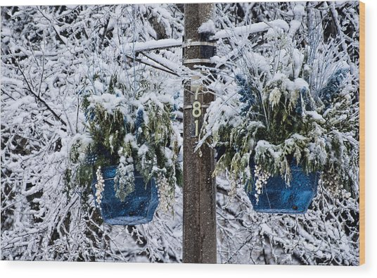 Blue Pots After Ice And Snow Storms Wood Print