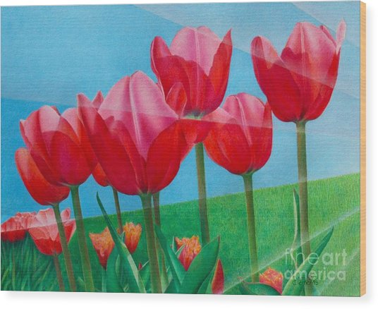 Blue Ray Tulips Wood Print
