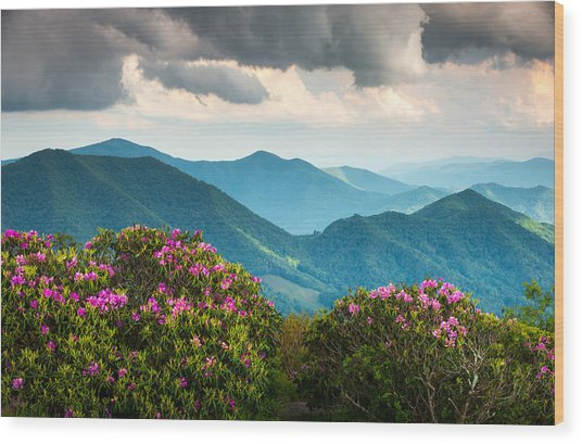 Blue Ridge Appalachian Mountain Peaks And Spring Rhododendron Flowers Wood Print