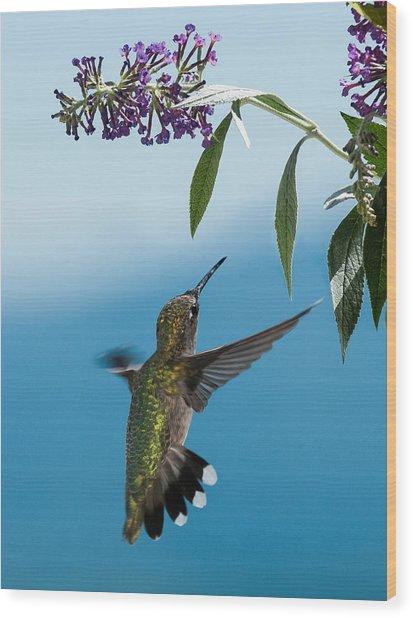 Blue Ridge Hummingbird Wood Print