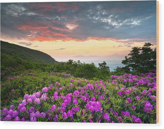 Blue Ridge Parkway Sunset - Craggy Gardens Rhododendron Bloom Wood Print